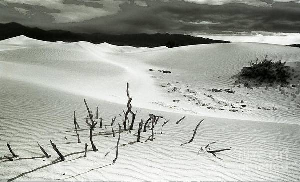 Vallery Photograph - Death Valley Brush by Norman Andrus