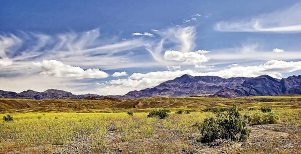 Photograph - Death Valley Flower Field by Endre Balogh