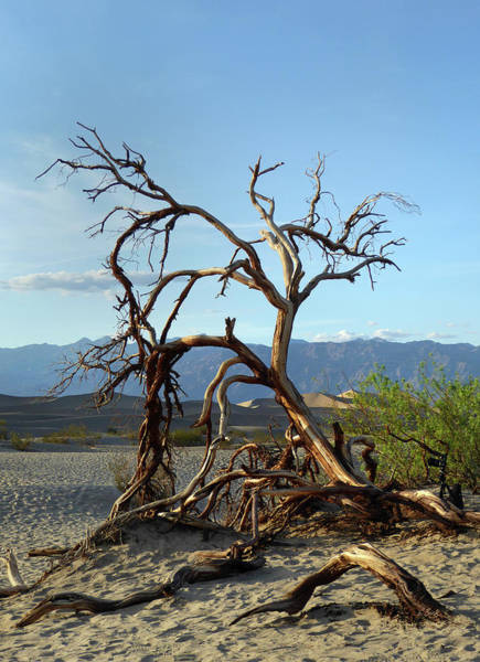 Furnace Creek Photograph - Death Valley Landscape by Gordon Beck