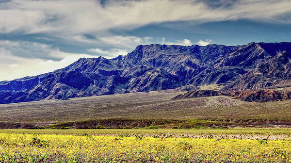 Photograph - Death Valley Wildflower Bloom by Endre Balogh