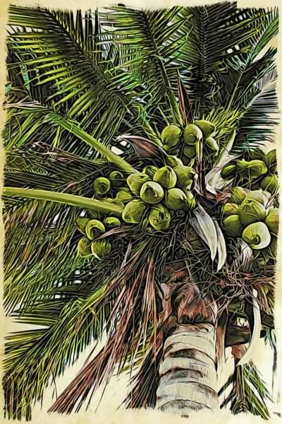 Photograph - Debbie's Coconuts by Alice Gipson