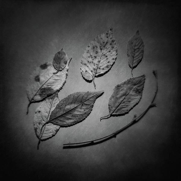 Limb Photograph - Decaying Leaves by Tom Mc Nemar