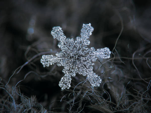 Photograph - December 18 2015 - Snowflake 1 by Alexey Kljatov