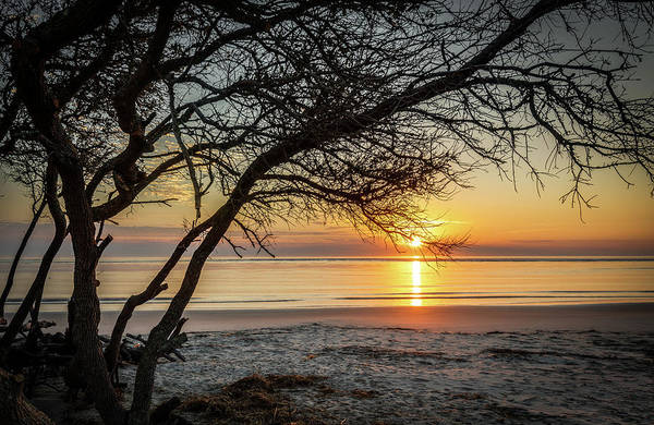 Photograph - December Light - Sullivan's Island, Sc by Donnie Whitaker