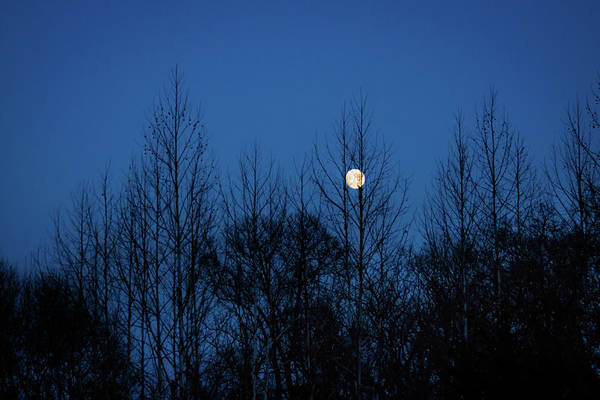 Photograph - December Moon by Jeff Phillippi