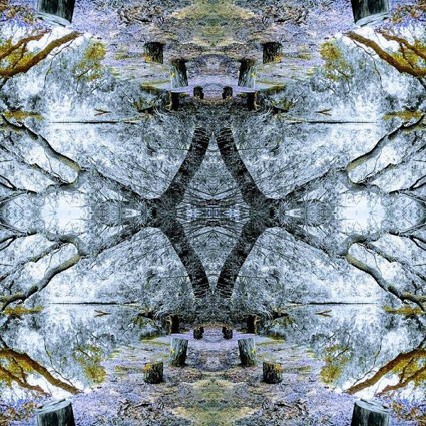 Digital Art - Deciduous Dimensions by Sherry Kuhlkin