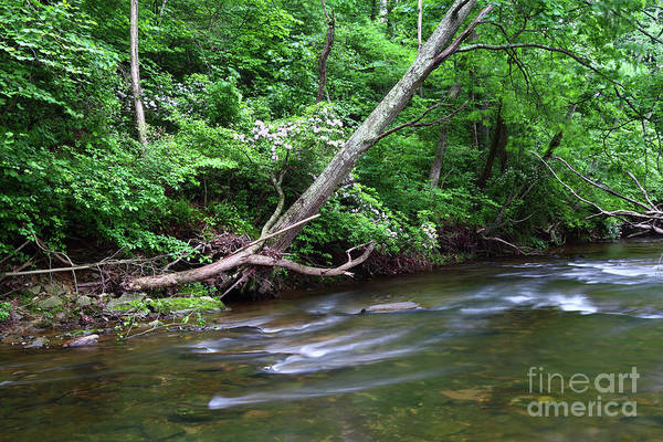Patapsco Photograph - Deciduous Forest Along The Patapsco River Maryland by James Brunker