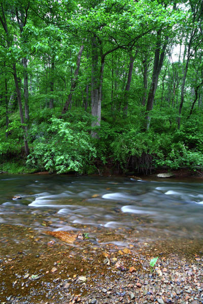 Patapsco Photograph - Deciduous Woodland And The Patapsco River Maryland by James Brunker