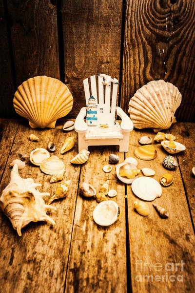 Seat Photograph - Deckchairs And Seashells by Jorgo Photography - Wall Art Gallery