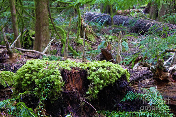 Photograph - Decomposers by Donna L Munro
