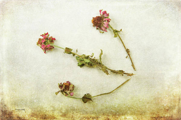 Photograph - Decomposing by Randi Grace Nilsberg