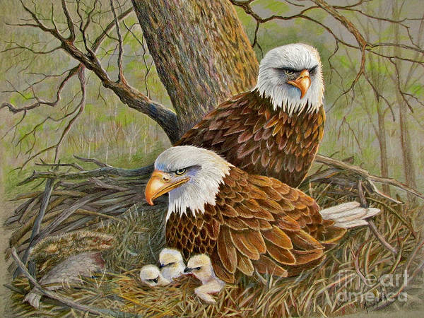 Colored Pencil Drawing Drawing - Decorah Eagle Family by Marilyn Smith