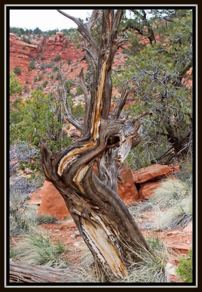 Decorative Dead Tree Art Print