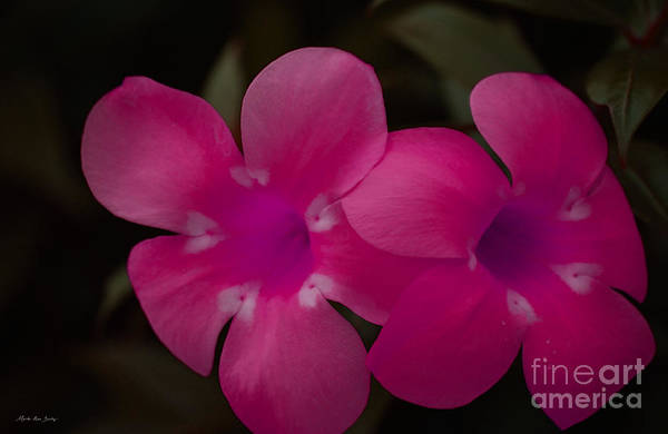 Photograph - Decorative Floral A62917 by Mas Art Studio