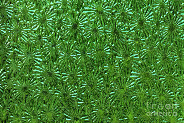 Wall Art - Photograph - Decorative Green Glass - Detail Of The Surface by Michal Boubin