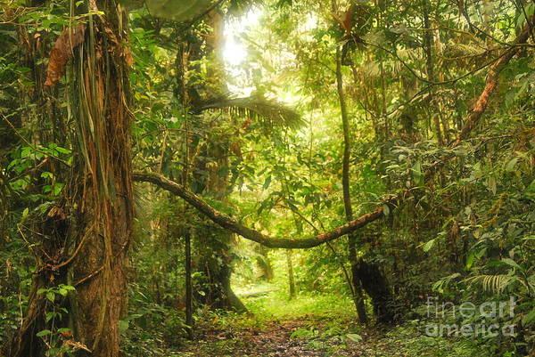 Brillante Photograph - Deep Amazon Jungle_original File by HQ Photo