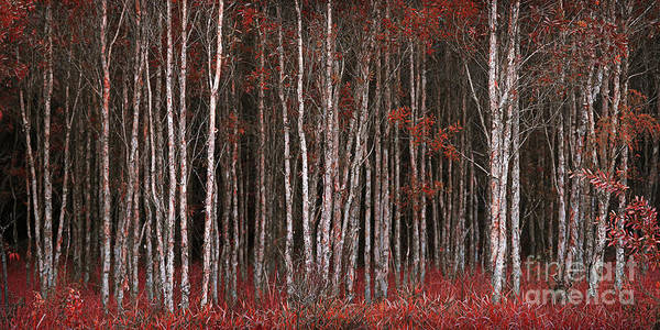 Photograph - Deep Forest 2 by Russell Brown