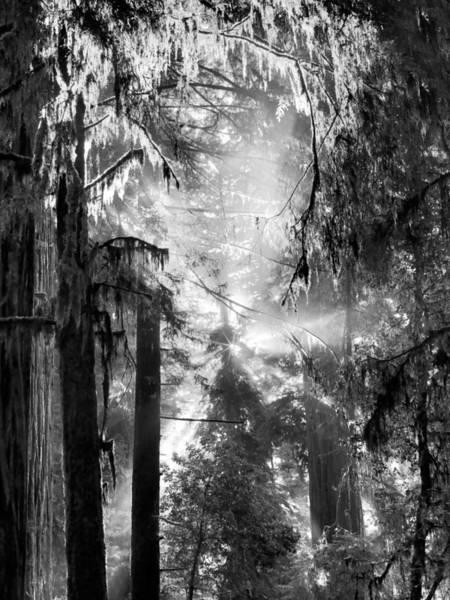 Magnificence Wall Art - Photograph - Deep Forest Light by Leland D Howard