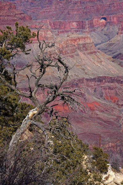 Photograph - Deep In The Canyon by Leda Robertson
