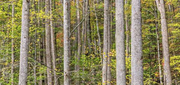 Photograph - Deep In The Forest - Blue Ridge Mountains, Nc by Donnie Whitaker