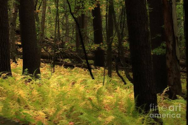 Photograph - Deep In The Forest by Marcia Lee Jones