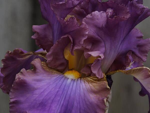 Look Into My Iris Art Print