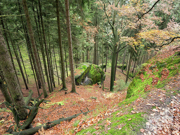 Woodland Wall Art - Photograph - Deep Ravine In The Forest by Michal Boubin