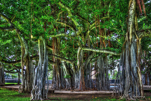 Photograph - Deep Roots Banyan Trees Thomas Square Honolulu Oahu Hawaii Collection Art by Reid Callaway