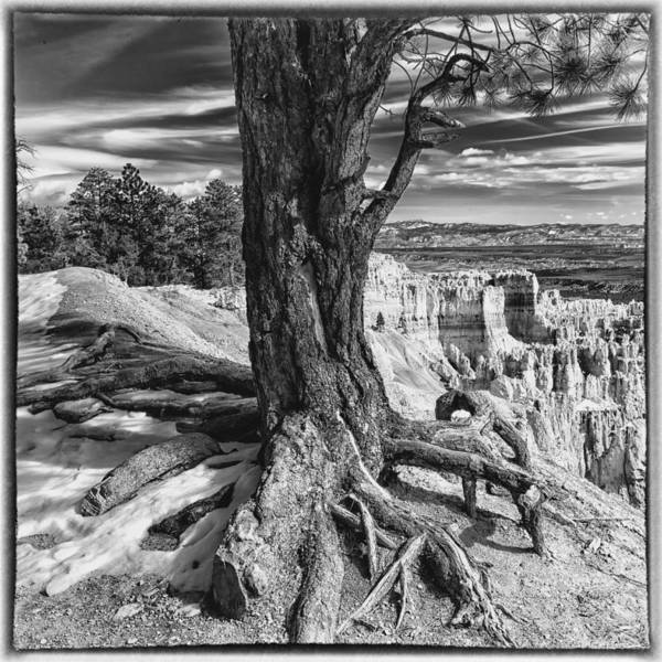 Photograph - Deep Roots by Ghostwinds Photography