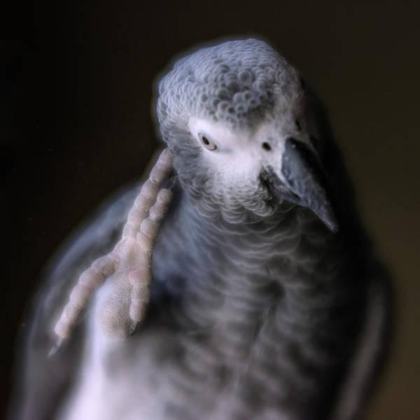 Photograph - Deep Thinker by Jennifer Grossnickle