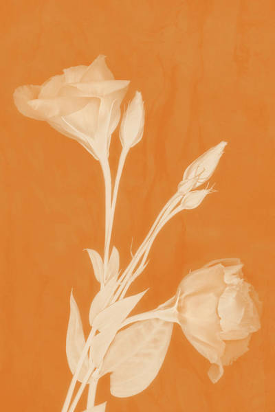 Photograph - Deep Within In Apricot by Leda Robertson