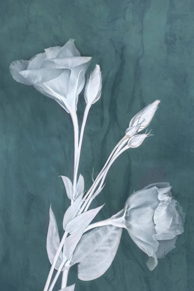 Photograph - Deep Within In Teal by Leda Robertson