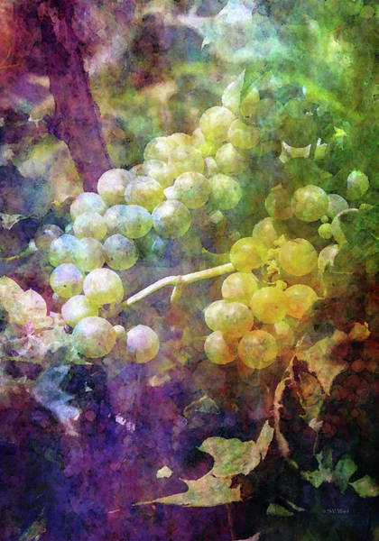 Photograph - Deep Within The Vineyard 2663 Idp_2 by Steven Ward