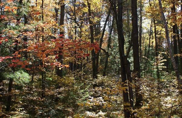 Wall Art - Photograph - Deep Woods Beauty by Nancy TeWinkel Lauren