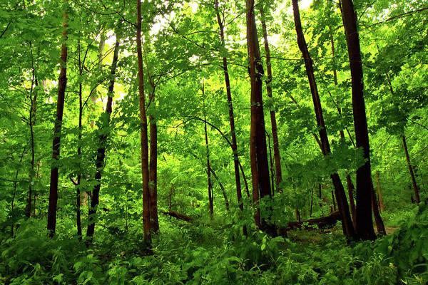 Photograph - Deep Woods by Phil Koch
