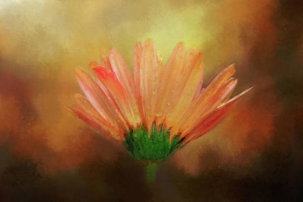 Wall Art - Digital Art - Deeply Colored Daisy by Terry Davis