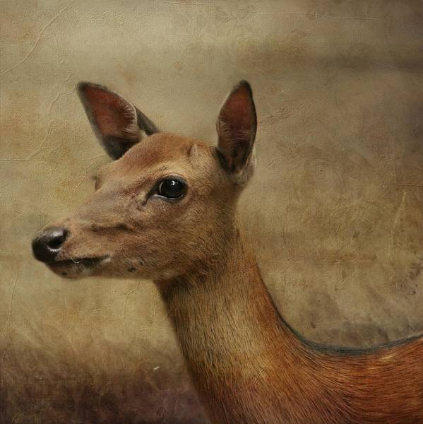 Bambi Mixed Media - Deer 1 by Heike Hultsch