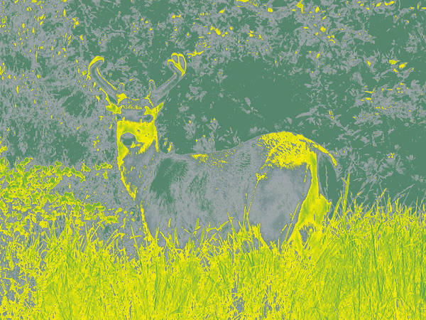 Photograph - Deer #2 by Anne Westlund