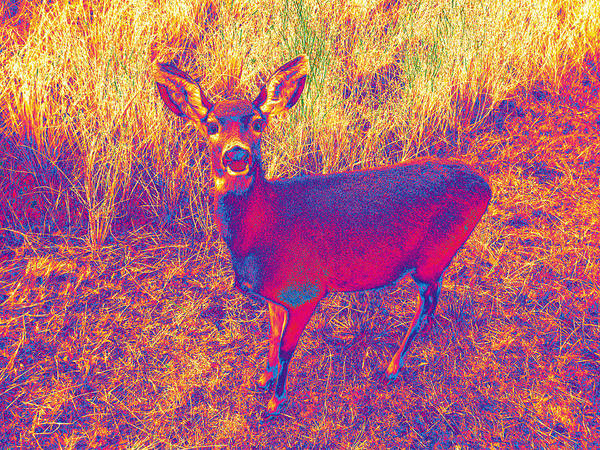 Photograph - Deer #9 by Anne Westlund