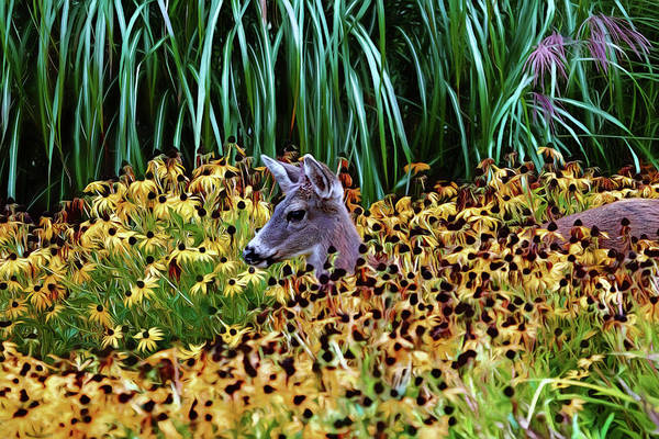 Photograph - Deer And Daisies In Color by Peggy Collins