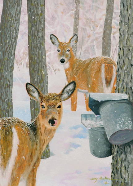 Painting - Deer And Sap Buckets by Harry Moulton