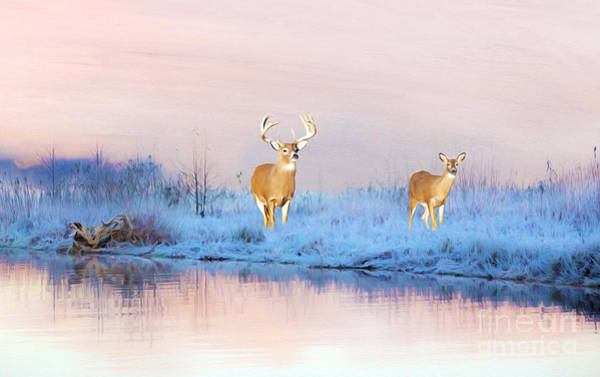 Winter Deer Photograph - Deer At Winter Pond by Laura D Young