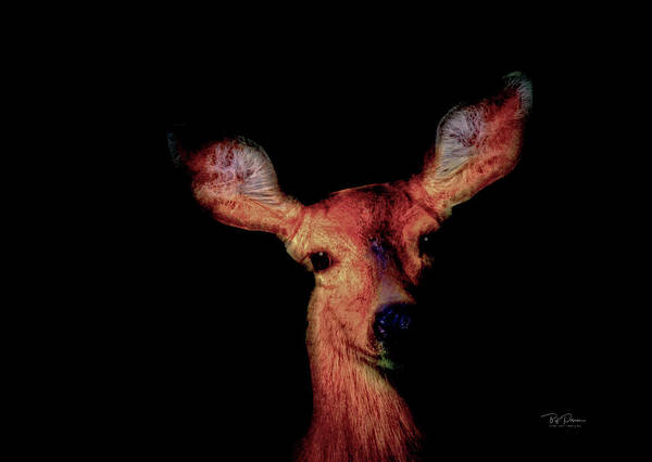 Photograph - Deer Ears by Bill Posner