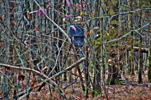 Photograph - Deer Feeder In A Forest by Gina O'Brien