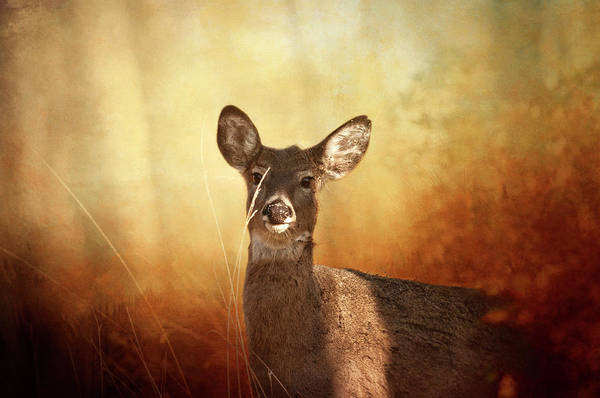 Wall Art - Photograph - Deer Hiding In The Woods by SharaLee Art