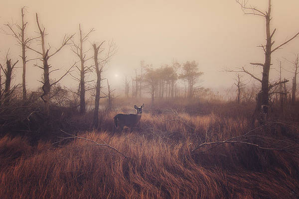 Wall Art - Photograph - Deer In Assateague Wetland - Doe - Wildlife by SharaLee Art