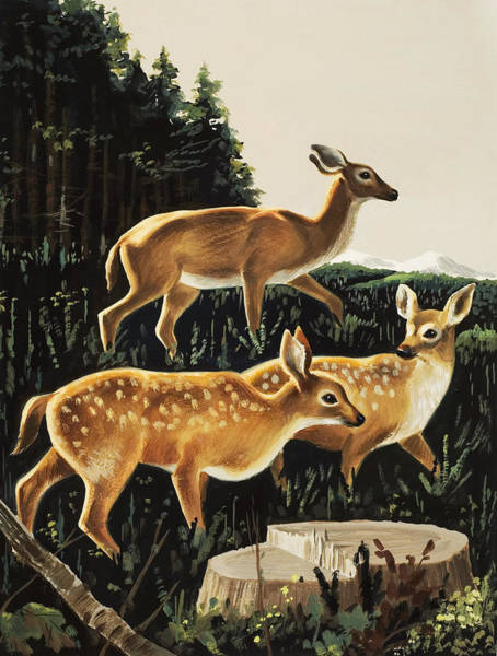 Stump Painting - Deer In Forest Clearing by English School