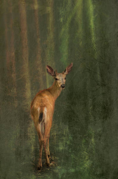 Photograph - Deer In The Woods by Marilyn Wilson