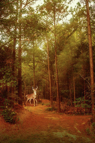 Photograph - Deer In Morning Light by Barry Jones