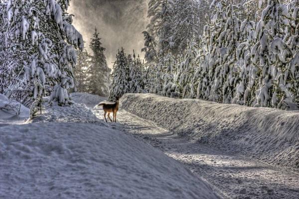 Photograph - Deer In Snow by Lee Santa